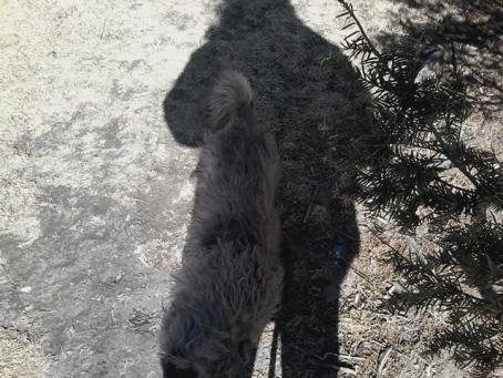 shadow keebame